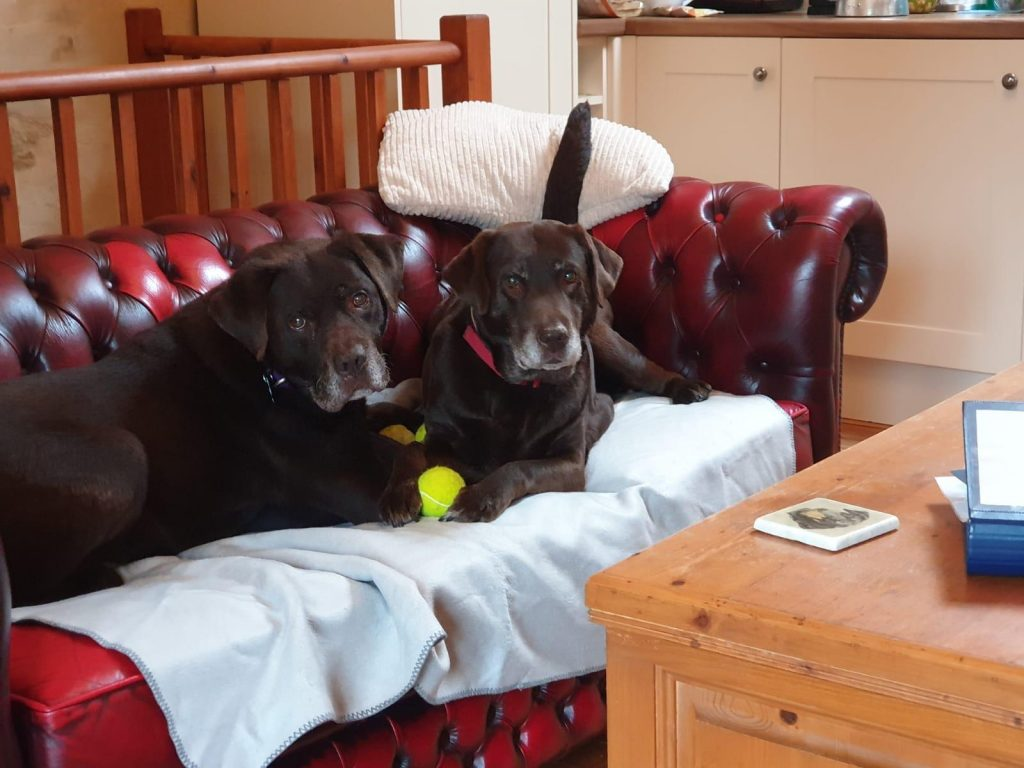 Guest Dogs in Nessa