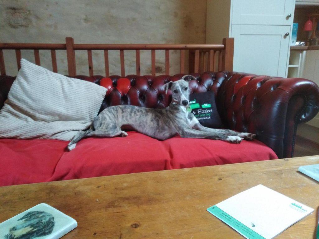 Dog in Nessa