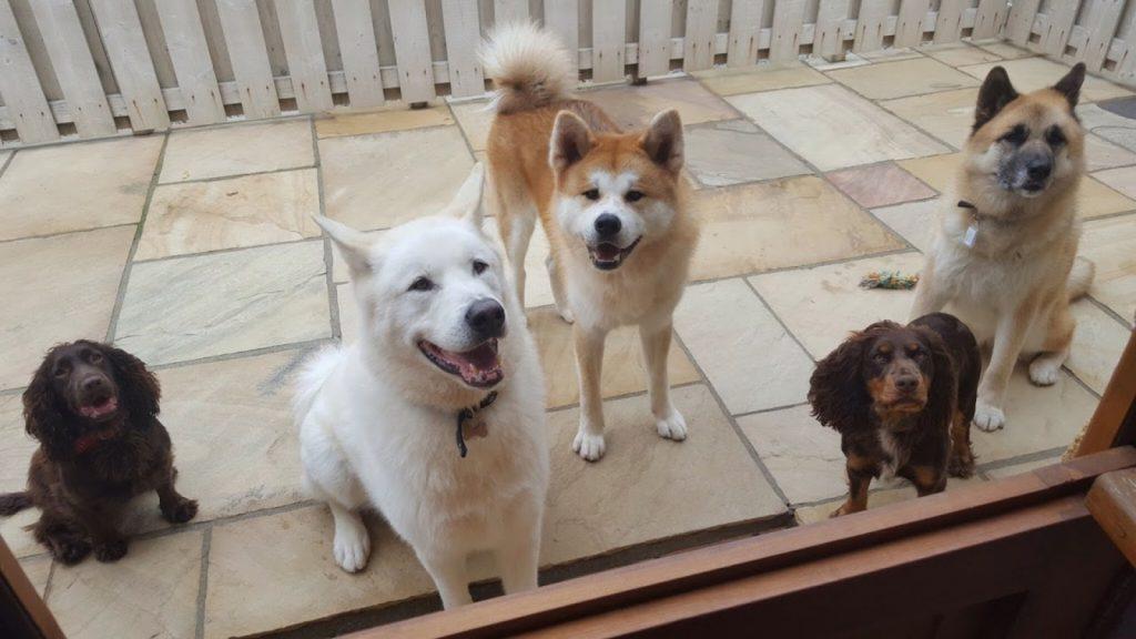 Peswora guest dogs