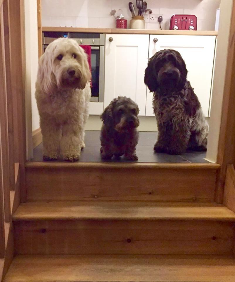 Tressa guest dogs